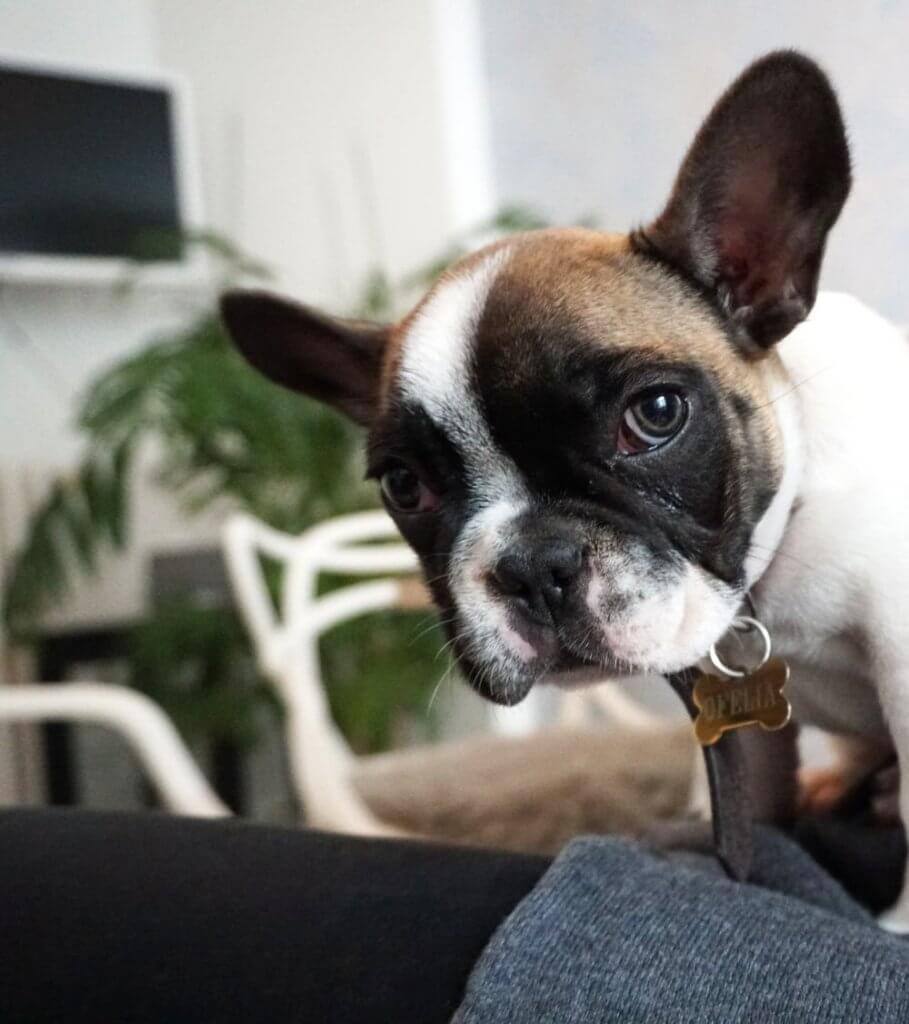 Hundepsychologie - Mir geht es nicht gut. Kannst du helfen?