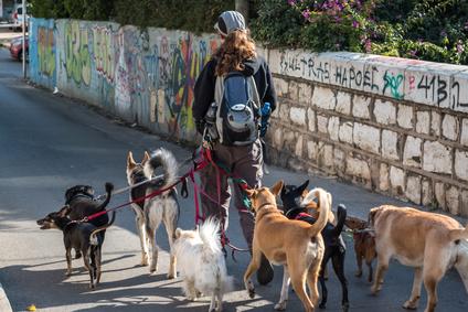 Hunde müssen im Landkreis Leer an die Leine