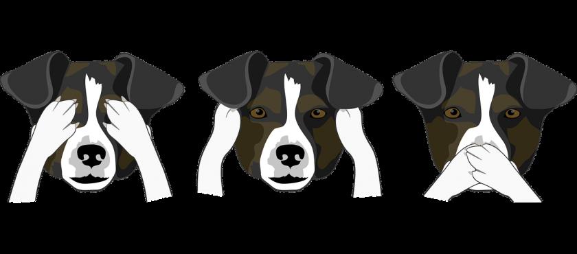 Hundeerziehung: Tipps zur Kommunikation mit Hunden